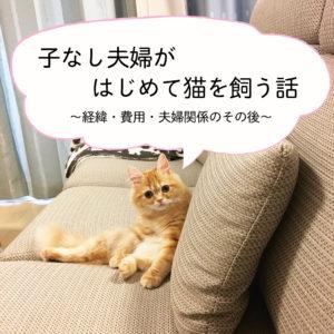 子なし夫婦がはじめて猫を飼う話